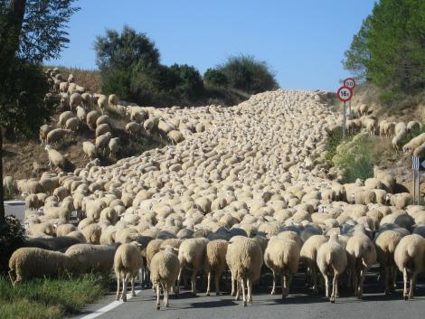 otras-ovejas